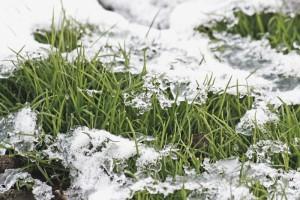 «Предчувствие весны»