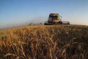 Все сельхозпредприятия округа приступили к жатве ранних зерновых культур