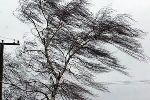 Внимание! В Белгородской области прогнозируется усиление ветра