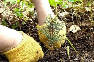 В Белгородской области 28 апреля объявлено днём посадки леса