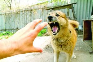 Осторожно: случаев заражения бешенством в области становится больше!