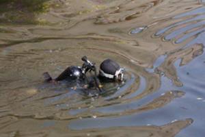 Cтарооскольские спасатели проводят чистку водоёмов