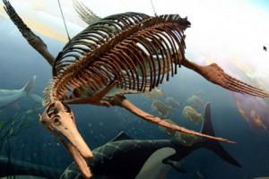 Найденные в карьере Стойленского ГОКа останки ихтиозавра передадут саратовскому музею