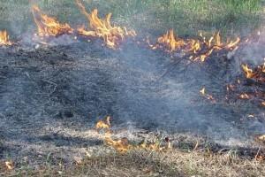 В Старооскольском округе горит сухая трава