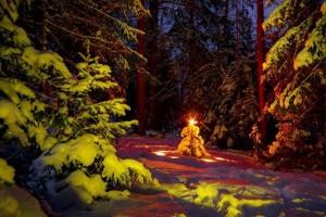 В лесу родилась елочка... История песни