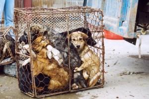 Спустя семь лет законопроект об обращении с животными прошел II чтение в ГД