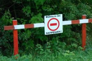 В Белгородской области объявлен пятый класс пожарной опасности лесов