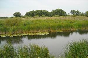 Из-за сброса вредных веществ в реке под Белгородом погибла рыба