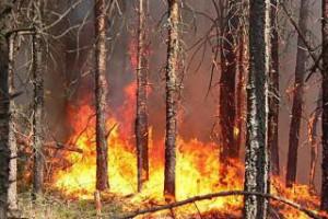 За противопожарной безопасностью лесов в этом году в области будут следить около четырех тысяч челов