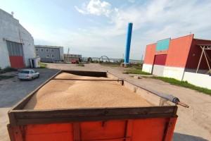Задержаны подозреваемые в краже более 26 тонн пшеницы с поля одной из агрофирм