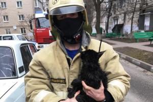 В городе Губкин пожарные помогли снять кота с дерева