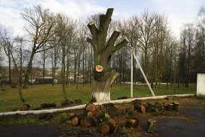Белгородец компенсирует ущерб в 5 миллионов рублей за незаконную вырубку леса