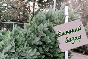 Места проведения ярмарок по реализации новогодних сосен и елей
