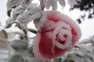 «Холод»