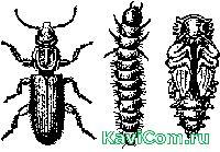 http://www.kavicom.ru/uploads/sub/87146a20_Image4297.jpg